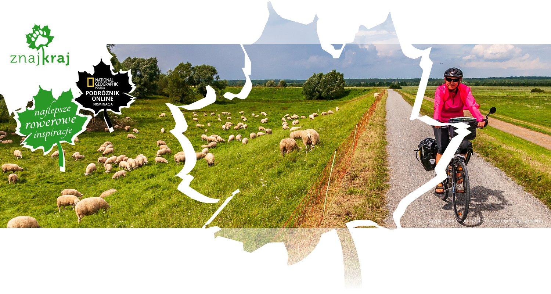 Wypas owiec nad Łabą