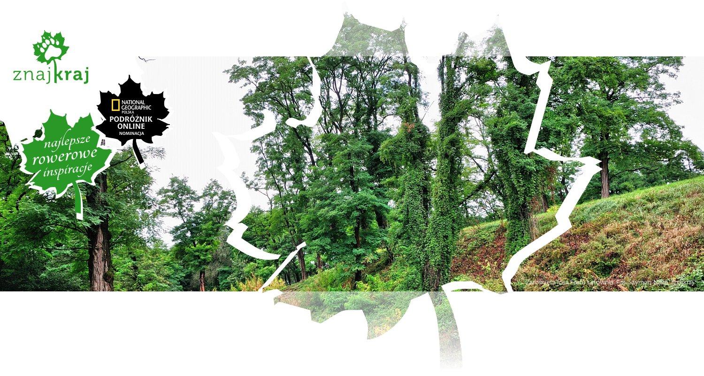 Zarośnięta fosa Fortu Łętownia