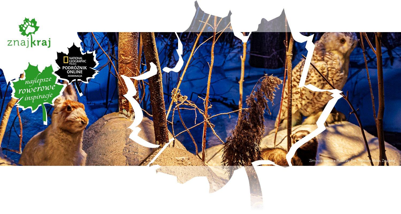 Zimowa scena z Puszczy