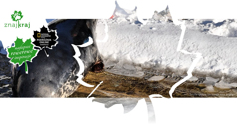 Zimowe fokarium