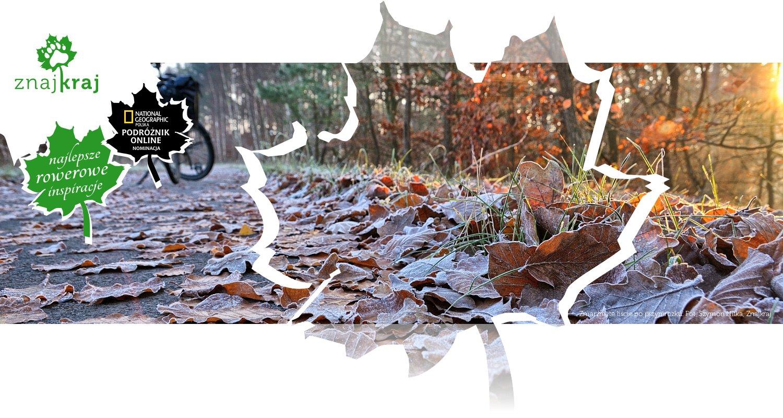 Zmarznięte liście po przymrozku