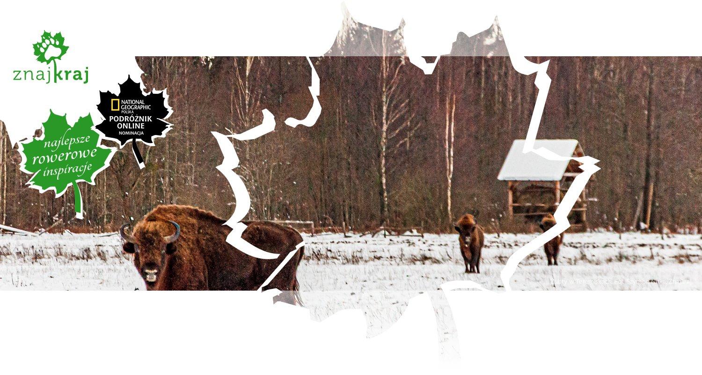 Żubry w Teremiskach