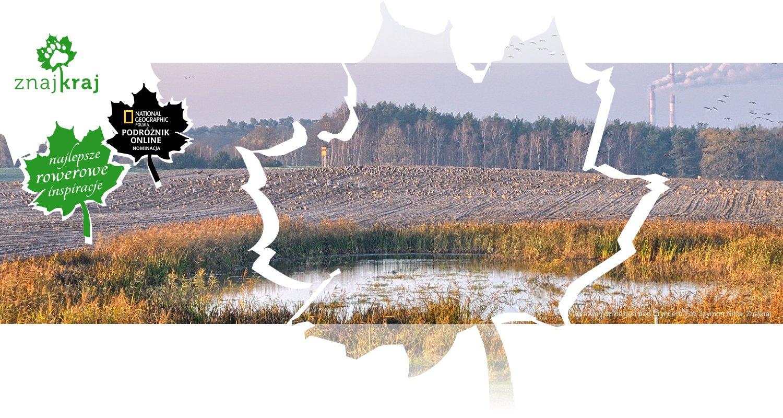 Żurawie i dzikie gęsi pod Gryfinem