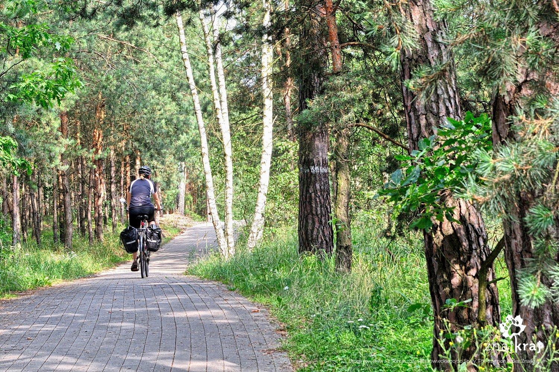 Droga rowerowa z Tomaszowa do Spały