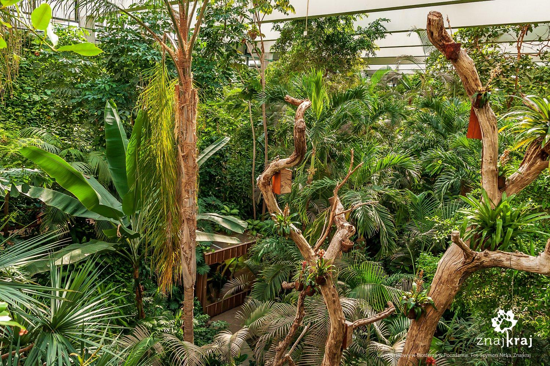 Las równikowy w Biosferze w Poczdamie
