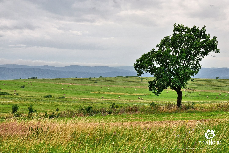 Podkarpacie - okolice Nowego Żmigrodu