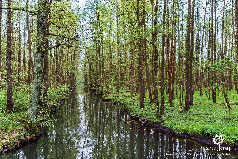 Rezerwat biosfery UNESCO Spreewald