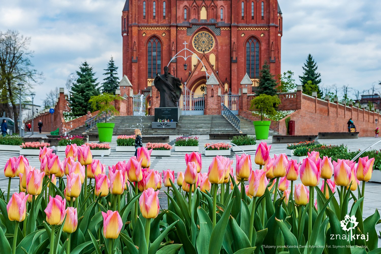 Tulipany przed Katedrą Ziemi Rybnickiej