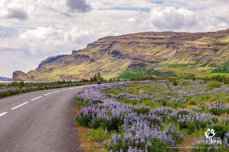 Droga wśród łubinu w kierunku Arnes