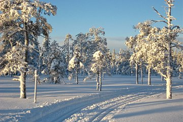 Szwecja na biegówkach. Fot. Ina Widegren